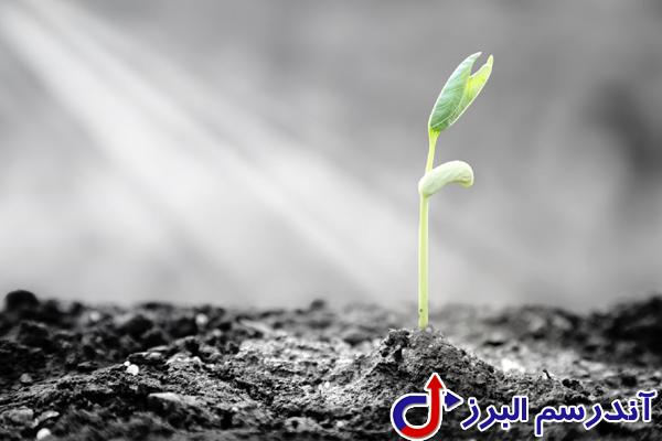 تجهیزات گلخانه -بافت بذر - شرکت آندرسم البرز