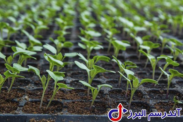 تجهیزات گلخانه -کاشت بذرگیاه - شرکت آندرسم البرز