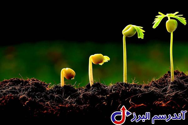 تجهیزات گلخانه -کاشت بذر - شرکت آندرسم البرز