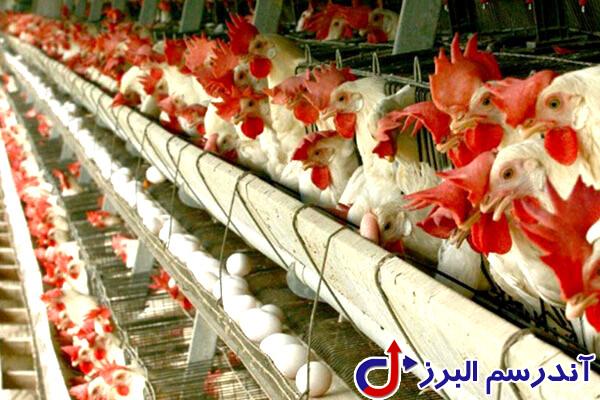 تجهیزات مرغداری- لوازم مرغداری- شرکت آندرسم البرز