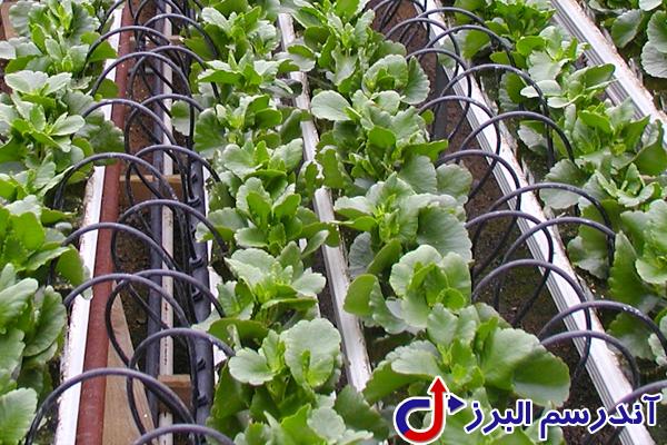 تجهیزات گلخانه - آبیاری قطره ای