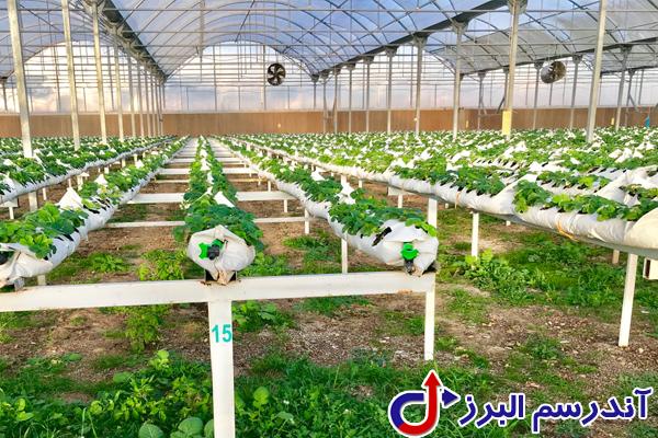 تجهیزات گلخانه- آندرسم البرز