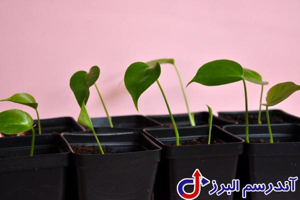 تجهیزات گلخانه -بذر گلدان - شرکت آندرسم البرز