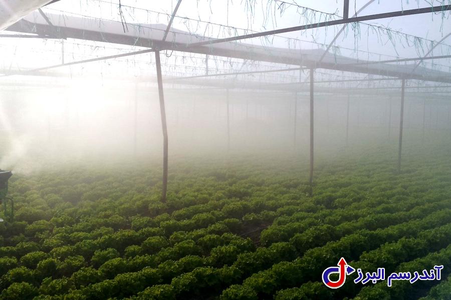 مه پاش گلخانه - آندرسم البرز